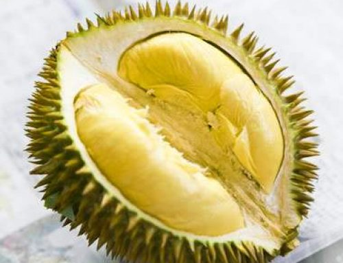 Pakowaczka durian z Malezji