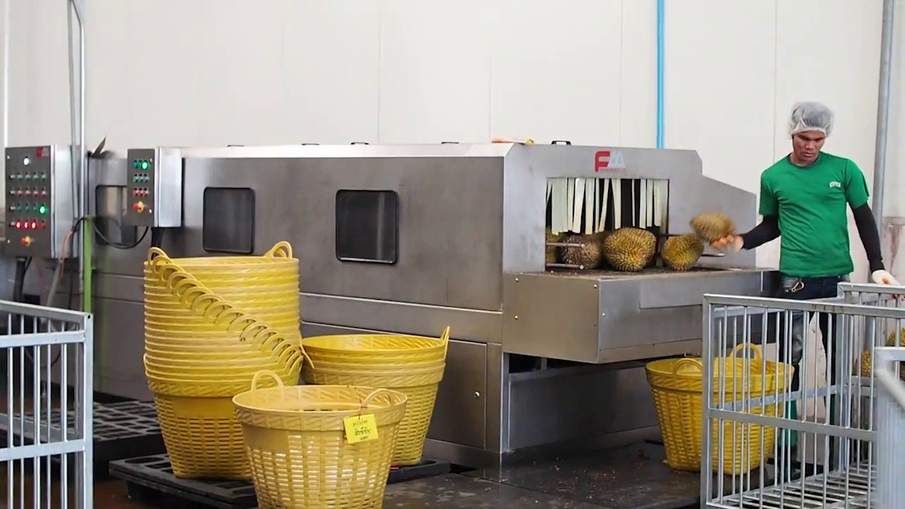 inside a durian factory